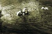 Ozorai vízibicikli a Sión, (GOS fotó), 1956 kl
